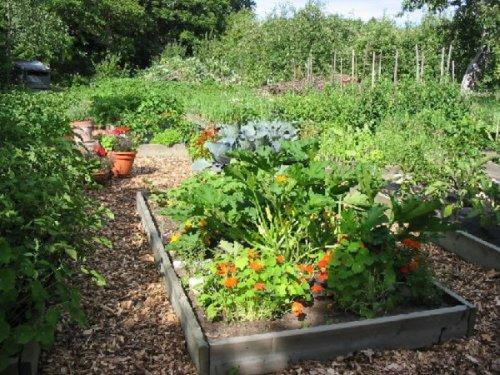 exemple idee déco jardin potager