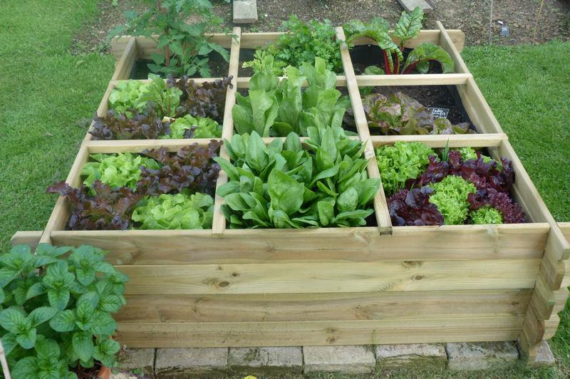 D co jardin potager for Deco jardin potager