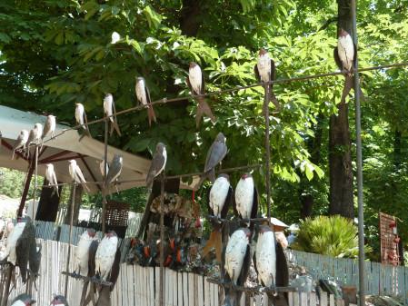D coration jardin oiseau metal for Oiseau decoration jardin