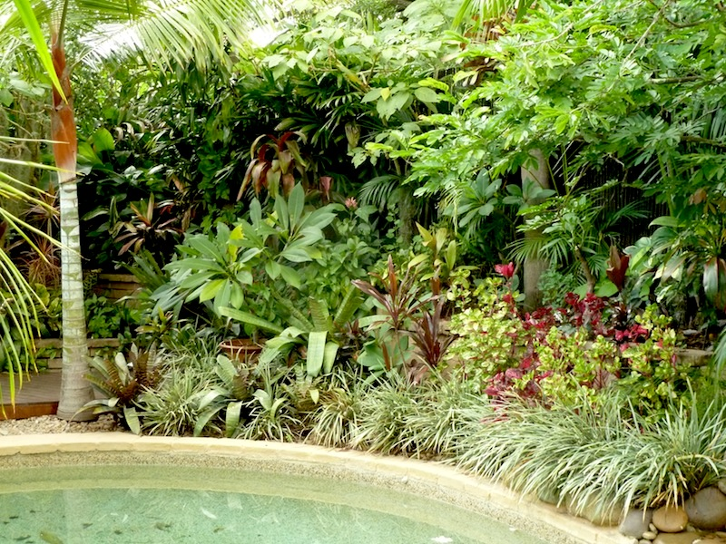 D coration jardin tropical for Decoration jardin tropical