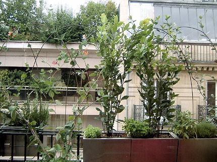 déco balcon exotique