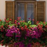 déco balcon fleuri