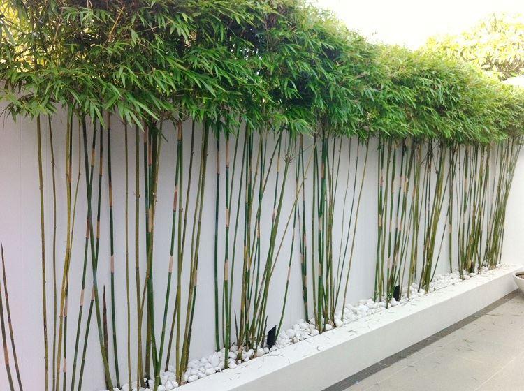 Idee Deco Jardin Bambou