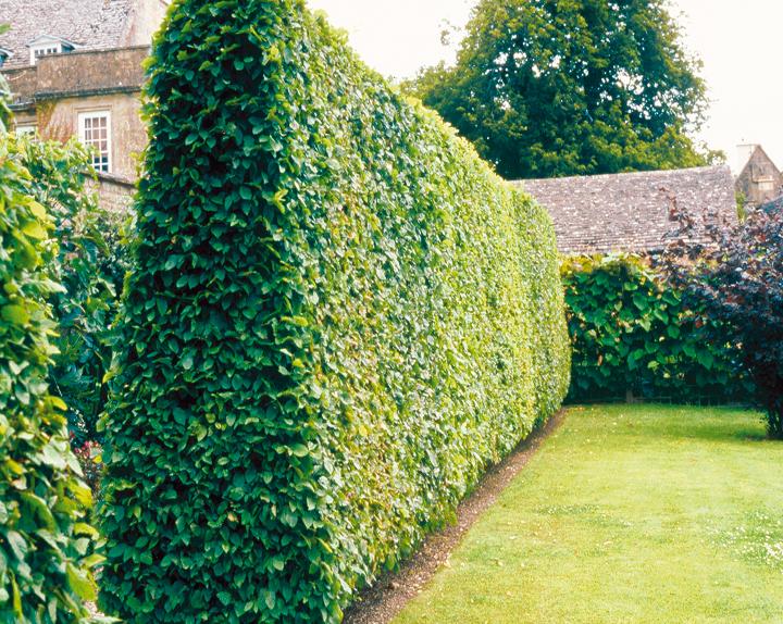 haie de jardin moderne haie de jardin moderne with haie de jardin moderne elegant haie jardin. Black Bedroom Furniture Sets. Home Design Ideas